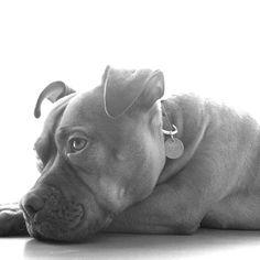dog bw