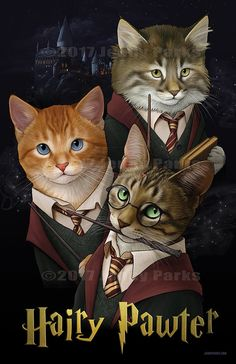 Two favourite things:Harry Potter&The Warrior cats I Love Cats, Crazy Cats, Cute Cats, Funny Cats, Adorable Kittens, Harry Potter Cat, Harry Potter Books, Warrior Cats, Baby Animals