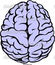 The human brain Vector Clip art Art And Illustration, Illustrations, Human Brain Drawing, Brain Vector, Brain Pictures, Arte Zombie, Graffiti Wallpaper Iphone, Brain Art, Hoodie