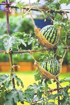 #gardentypes #gardening #vegetable #beginners #garden #garden #garden #design #types #ideas #yard #easy #try #for #toGarden Types 60 Easy to Try Vegetable Garden for Beginners Design Ideas