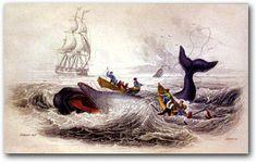 New Bedford_whaler