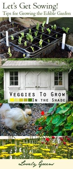 Tips for growing the Edible Garden - planning, sowing, growing, and harvesting from your Kitchen Garden #kitchengarden #squarefootgardening #ediblegarden