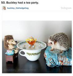 A hedgehog at a tea party.