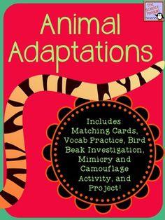 Animal Adaptations Teaching Tools $