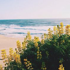 #coastal color inspiration