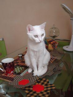 my cat on my project in progress)))