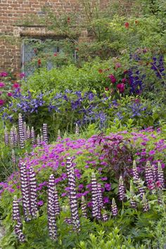 Purple Border, Sissinghurst,NT