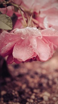 Spring rain