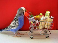 Shopping parakeet