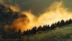 The Golden Mist. Raphaelle Monvoisin photography.