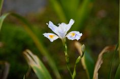 Little flower by Mengqiu Chen on Natural World, Chen, Wildlife, Nature, Flowers, Plants, Naturaleza, Plant, Nature Illustration