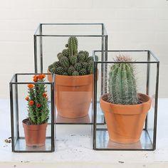 kaktus in a box Indoor Cactus, Indoor Garden, Indoor Plants, Home And Garden, Interior Plants, Diy Interior, Home Flowers, Deco Originale, Inside Home