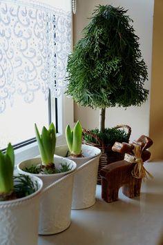 Choinki z gałęzi tui Tree Decorations, Christmas Crafts, Christmas Trees, Flower Arrangements, Diy Crafts, Holiday Decor, Floral, Flowers, Plants