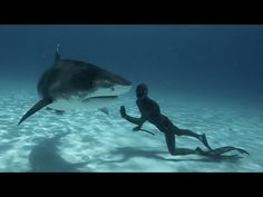 This Australian Freediver Swam With Tiger Sharks And It Was Beautiful