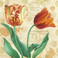 Choosing Tulips  Beth Grove - Licensing Artist  bethgrove.com