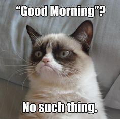 Love grumpy cat!