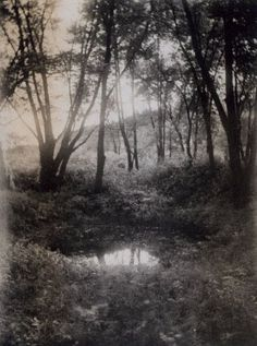 Frances S. and Mary E. Allen -- Forest Pool, 1905-1911