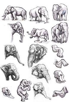 elephant anatomy - Google keresés