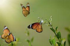 It's my way... (Muhammad Farooq / Karachi / Pakistan) #NIKON D5100 #macro #photo #insect #nature