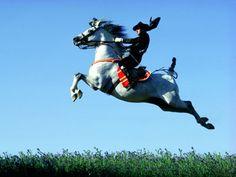Feria del Caballo (Festival of the Horse), Jerez, Andalucia, Spain