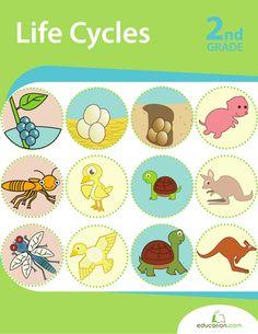Workbooks: Life Cycles