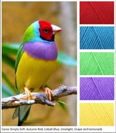 Nature has the freshest ideas for colors. red, blue, green, purple, yellow