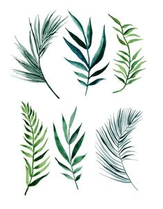 Items similar to ORIGINAL Palm Leaves water-colour painting on Etsy - ORIGINAL Palm Leaves water-colour painting by ImaginaryNature - Watercolor Plants, Watercolor Leaves, Watercolour Painting, Floral Watercolor, Plant Illustration, Botanical Illustration, Watercolor Illustration, Motif Tropical, Tropical Leaves