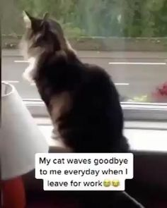 Kitty waves bye Funny Cute Cats, Cute Funny Animals, Cute Baby Animals, Funny Animal Images, Wild Animals, I Love Cats, Crazy Cats, Tierischer Humor, Gato Gif