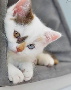 Google+………HI THERE YOU BEAUTIFUL LITTLE KITTY-KAT……ALL THE MORE SO WITH YOUR AMAZING DIFFERENT-COLORED EYES…………….ccp