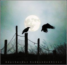 A raven and a full moon