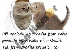 Animals And Pets, Haha, Funny Memes, Carpe Diem, Guinea Pigs, Patriots, Pictures, Pets, Ha Ha