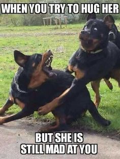 Top 29 Funny Animal Memes Humour – Life Is Memes Dog Jokes, Funny Dog Memes, Crazy Funny Memes, Really Funny Memes, Funny Relatable Memes, Funny Dogs, Funny Stuff, Dankest Memes, Silly Dogs