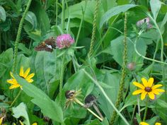 Wildflowers in Ohio