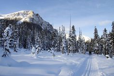 Cross country skiing along the Fairview Trail near Lake Louise