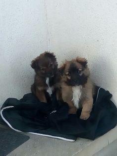 Two cute little dogs.