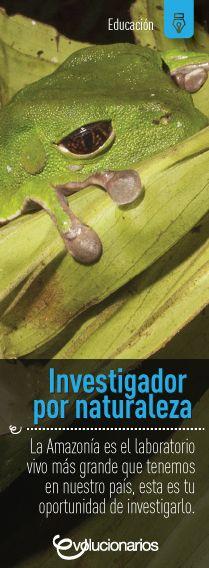 En el Ecuador se construye la Universidad Regional Amazónica IKIAM, con el objetivo de estudiar la selva dentro de su mismo entorno