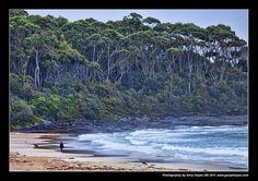 Woman Walker and Dog, Bawley Point Beach, South NSW Coast | Flickr - Photo Sharing!