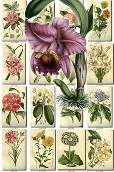 FLOWERS-95 Collection of 248 vintage images roses water lily beautiful florist botanical pictures High resolution digital download printable data-share-from=listing > <span class=etsy-icon