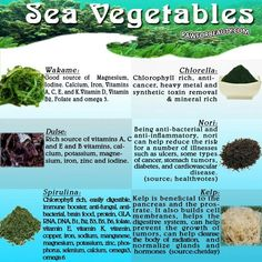 Health Benefits of Sea Vegetables - Wakame, Chlorella, Dulse, Nori, Spirulina and Kelp Health And Nutrition, Health And Wellness, Health Tips, Holistic Wellness, Health Care, Health Options, Holistic Nutritionist, Holistic Medicine, Sports Nutrition