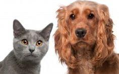 des remèdes anti puces et anti tiques pour chat et chien