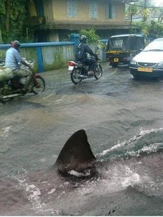 Jaws caught in traffic! I don't want to  live where ever this place is.