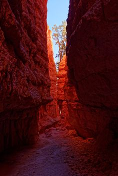 bryce national park - bryce national park Bryce National Park, National Parks, Antelope Canyon, Nature, Travel, Naturaleza, Viajes, Destinations, Traveling