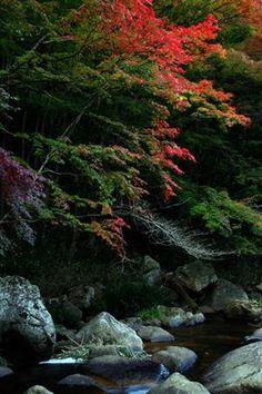 *Autumn Ravine (by Hiroshi Oka)