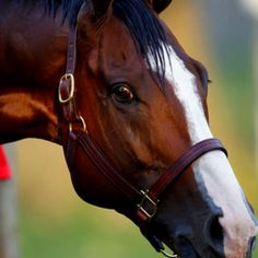 Union Rags' Beautiful Eyes.