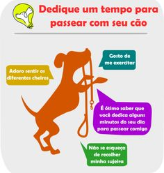 passear com seu cachorro Dog Training Courses, Brain Training, Pet Dogs, Dog Cat, Animals And Pets, Cute Animals, Yorkshire Terrier Dog, Cat Facts, Pet Health