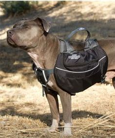 Dog Whisperer Dog Backpack     Dogs love having jobs, and if they're focused on walking and carrying, they are much less likely to chase squirrels or bicyclists. There's nothing more therapeutic for a dog than having a job to do, and carrying a backpack is that job.   – Cesar Millan