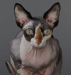 Kittyrat