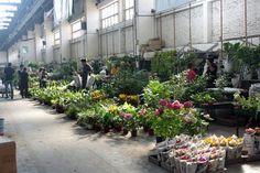 Mercado de Barracas: una visita al paraíso de las flores - Living - ESPACIO LIVING