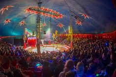 Zippos Circus Tickets