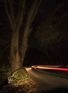 The Endemic Project, best described as an experimental and immersive installation experience, is found along Rhodes Drive and is both artistic and informative in nature. Outdoor Activities, Meet, Outdoors, Nature, Artist, Plants, Projects, Log Projects, Naturaleza